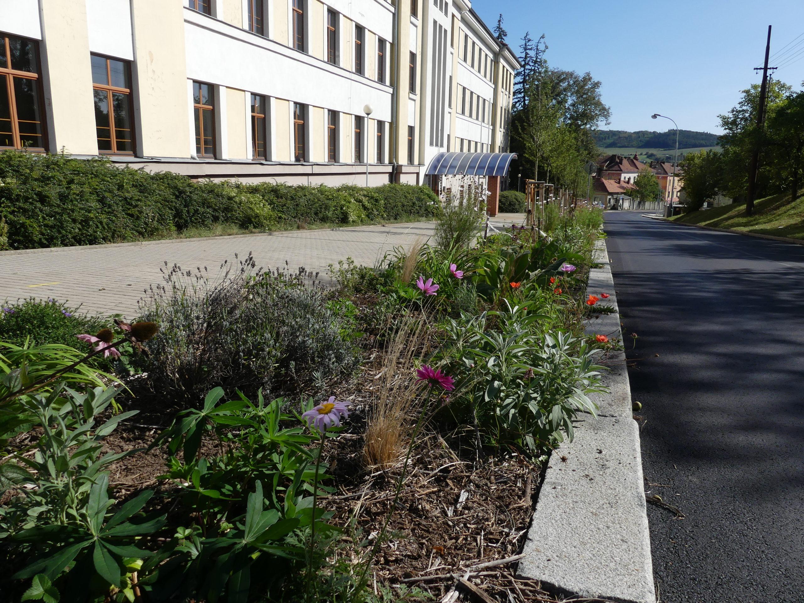 Alej a kvetoucí záhony v Talichově ulici