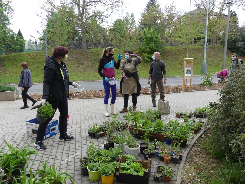 Dobrovolníci přinášejí trvalky do sbírky pro Talichovu ulici